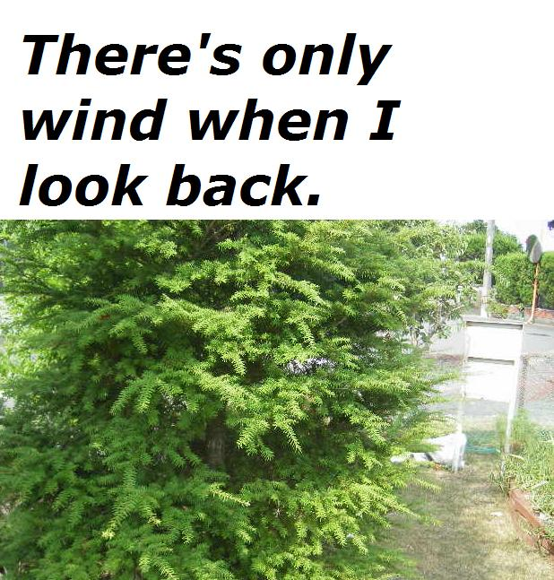 there-is-only-wind-when-i-look-back.jpg